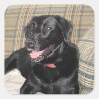 Black Labrador stickers (sheet of 20)
