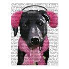 Black Labrador With Ear Muffs Postcard