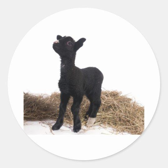 black lamb classic round sticker