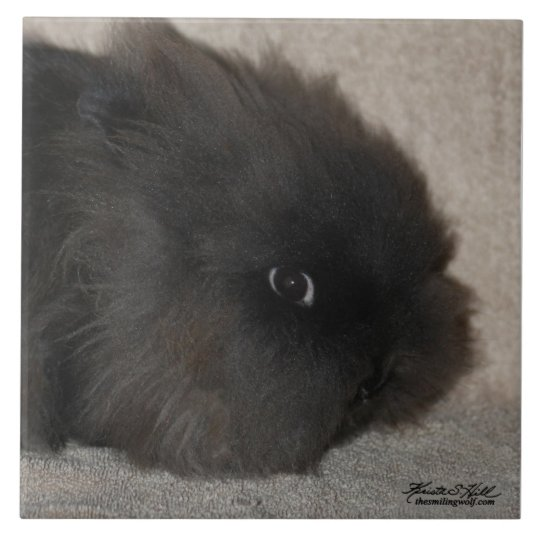 Black Lionhead Rabbit Tile