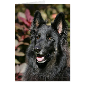 Black Long Haired German Shepherd Greeting Card