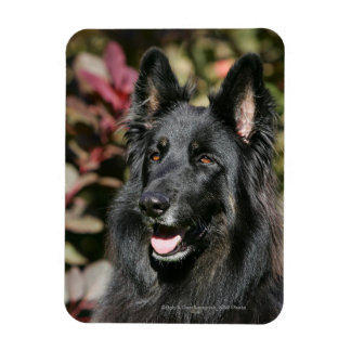Black Long Haired German Shepherd Magnet