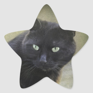 Black male cat with green eyes stickers