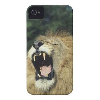 Black-maned male African lion yawning, headshot, iPhone 4 Cover