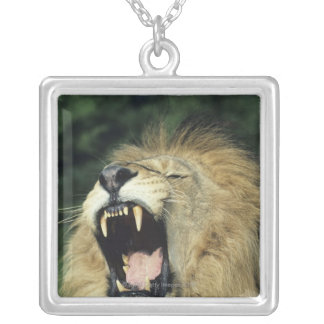 Black-maned male African lion yawning, headshot, Silver Plated Necklace