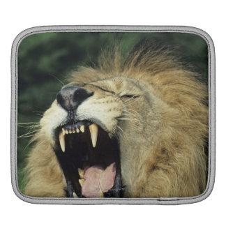 Black-maned male African lion yawning iPad Sleeve
