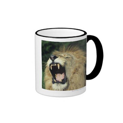 Black-maned male African lion yawning Coffee Mug