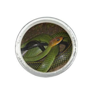 Black-margined Ratsnake or Green rat snake