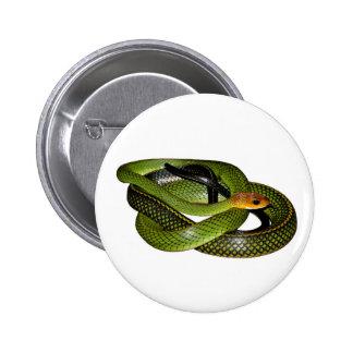Black-margined Ratsnake or Green rat snake 6 Cm Round Badge