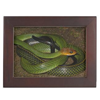 Black-margined Ratsnake or Green rat snake Keepsake Box