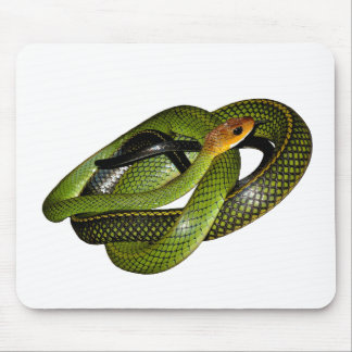 Black-margined Ratsnake or Green rat snake Mouse Mat