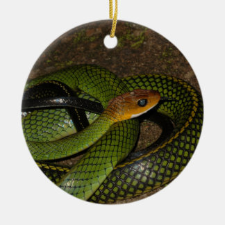 Black-margined Ratsnake or Green rat snake Round Ceramic Decoration