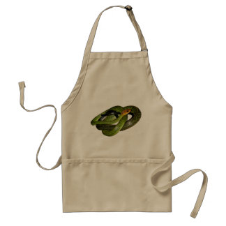 Black-margined Ratsnake or Green rat snake Standard Apron