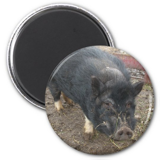 Black miniature pig 43a 6 cm round magnet