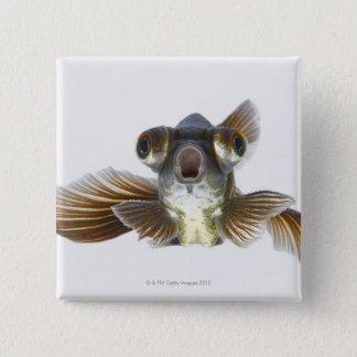 Black moor goldfish (Carassius auratus) 15 Cm Square Badge