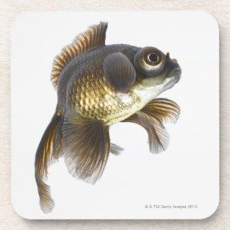 Black moor goldfish (Carassius auratus) 2 Beverage Coaster