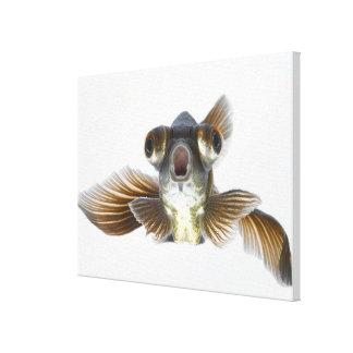Black moor goldfish (Carassius auratus) 2 Canvas Print