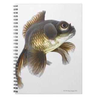 Black moor goldfish (Carassius auratus) 2 Spiral Note Books