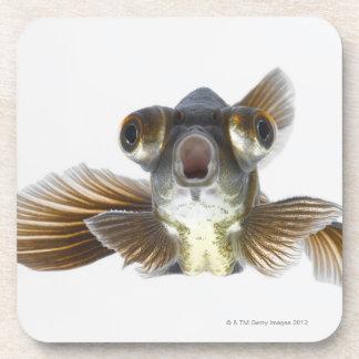 Black moor goldfish (Carassius auratus) Drink Coaster