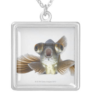Black moor goldfish (Carassius auratus) Silver Plated Necklace