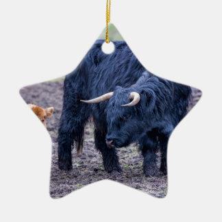 Black mother scottish highlander cow ceramic star decoration