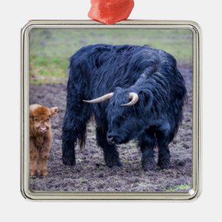 Black mother scottish highlander cow Silver-Colored square decoration