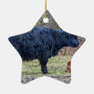 Black mother scottish highlander cow with calf ceramic star decoration