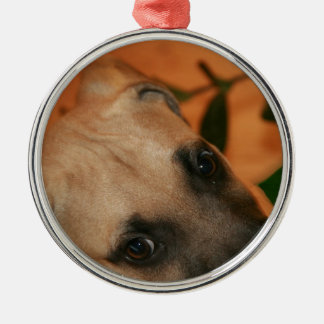 Black-mouth cur puppy christmas ornament