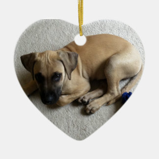 Black-mouth cur puppy with blue toy christmas ornament
