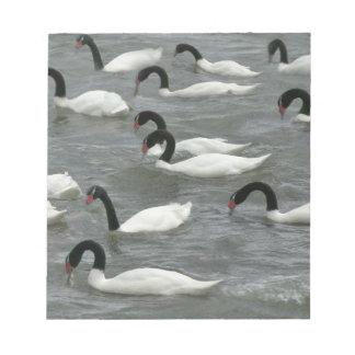 Black-necked swans (Cygnus melancoryphus) on Notepad