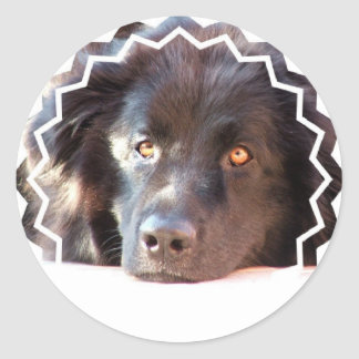 Black Newfoundland Dog Stickers