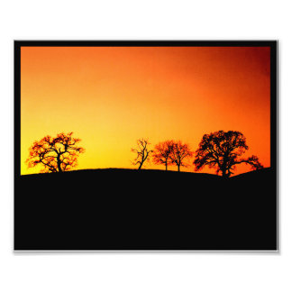 Black Oak Sunset Photo Print