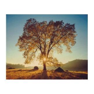 Black Oak Trees   Cleveland National Forest, CA Wood Wall Decor