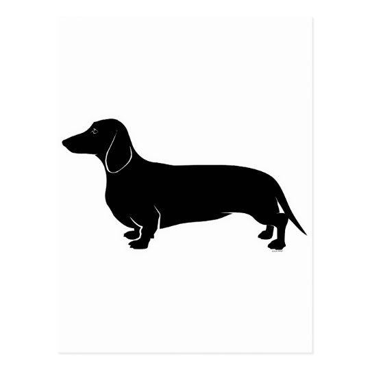 Black on White Dachsund Postcard