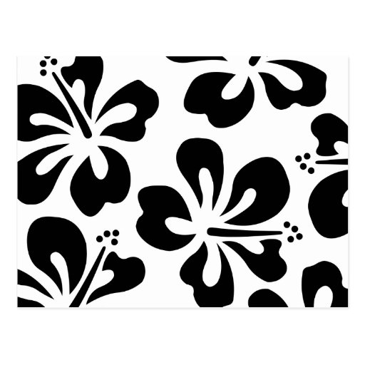 Black on White Hibiscus Post Cards