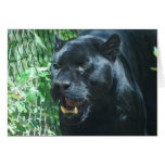 Black Panther Cat  Greeting Card