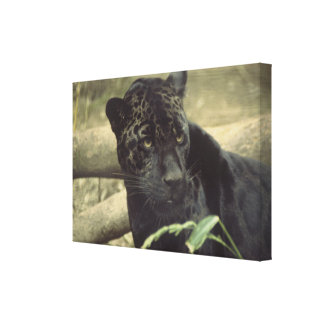 Black Panther Jaguar Canvas Print