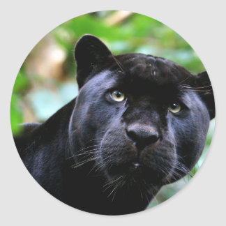 Black Panther Macro Classic Round Sticker