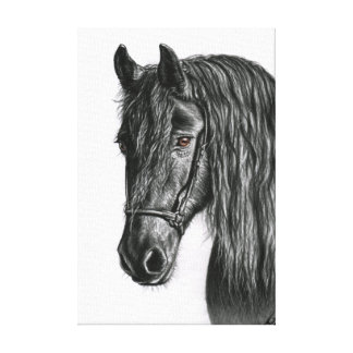 Black Pearl - Frisian Horse Stretched Canvas Print