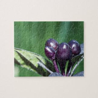 Black Pearl Pepper (Capsicum annuum) fruit and lea Puzzle