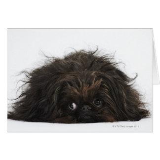 Black Pekingese dog lying down Card