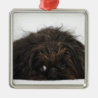 Black Pekingese dog lying down Christmas Ornament