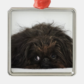 Black Pekingese dog lying down Silver-Colored Square Decoration