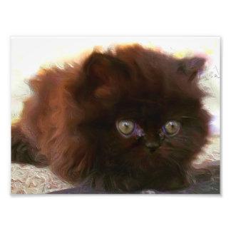Black persian kitten photo print