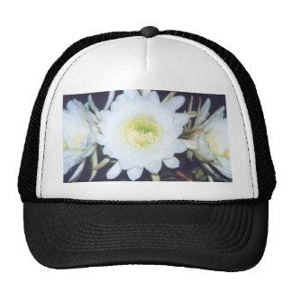 Black Phoebe cap Mesh Hat