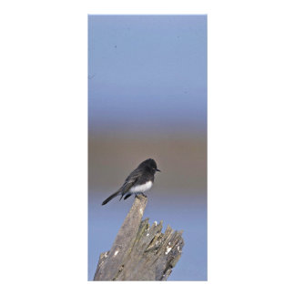 Black Phoebe Personalized Rack Card