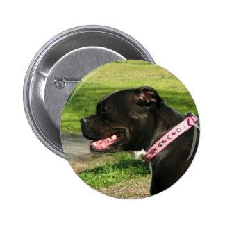 Black Pit Bull 6 Cm Round Badge