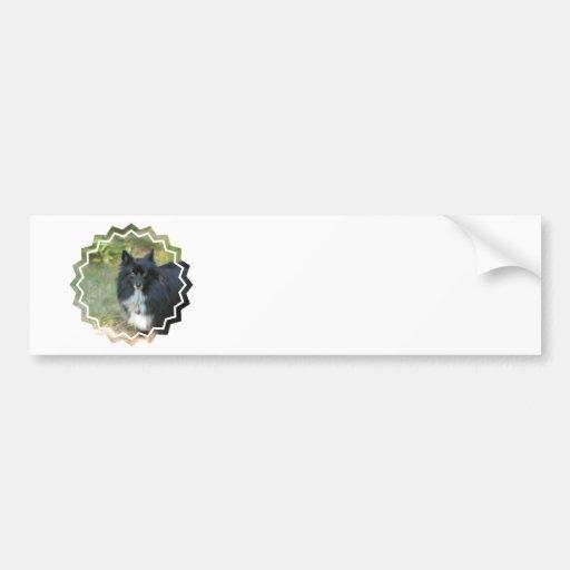 Black Pomeranian  Bumper Stickers