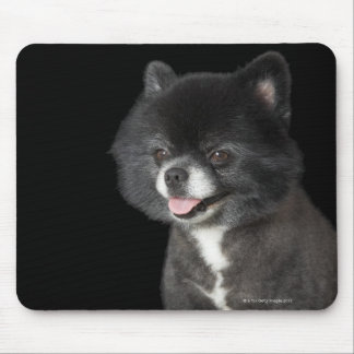 Black Pomeranian looking to the left Mouse Mat