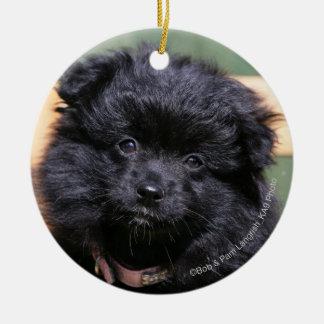 Black Pomeranian Puppy Christmas Ornament